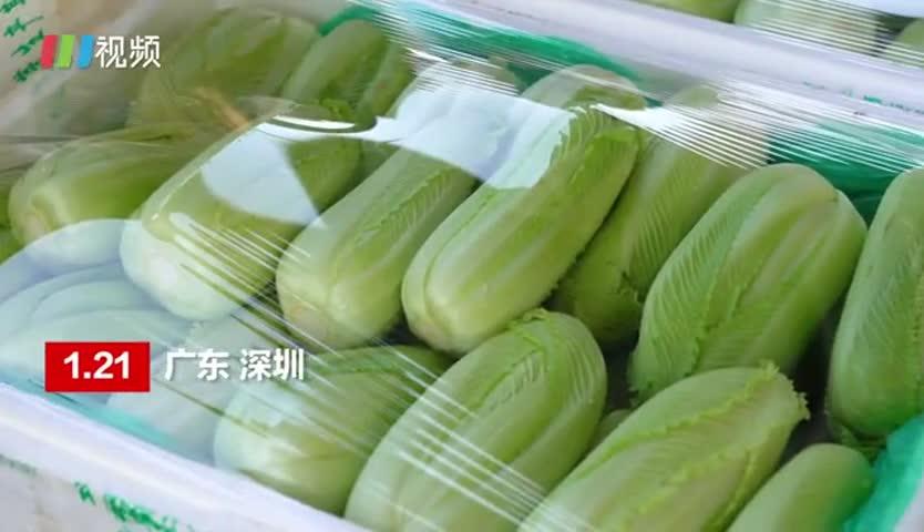 留深圳过年肉菜管够 1.5万吨蔬菜安排上了!