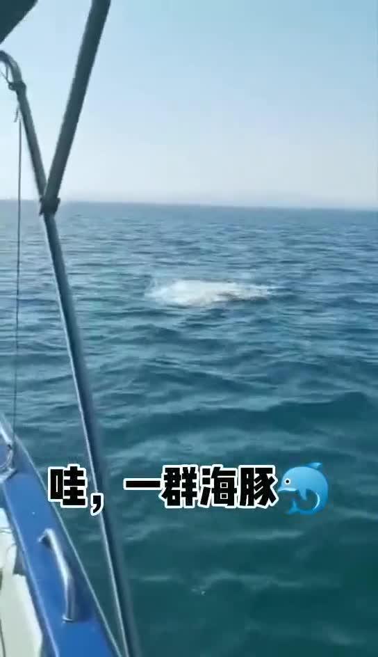 惊喜!大鹏海域出现成群的海豚,随着海浪上下跳跃